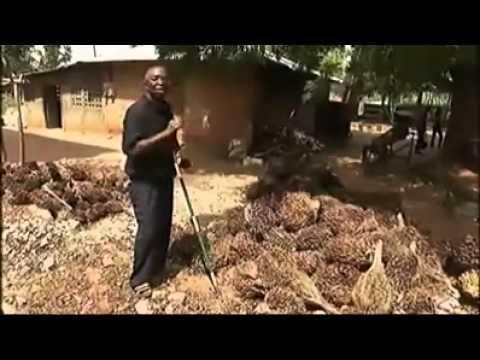 Exemple de développem. agricole intégré en Afrique