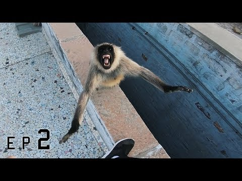 Rooftop monkey attack! 🇮🇳