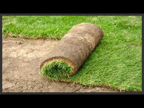 sod - Step by step guide for installing new sod in your yard. Also see my other videos on sod installation: http://youtu.be/gtzvIpKMHKE and http://youtu.be/IJ35fXy...