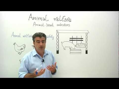 Animal welfare: animal-based indicators