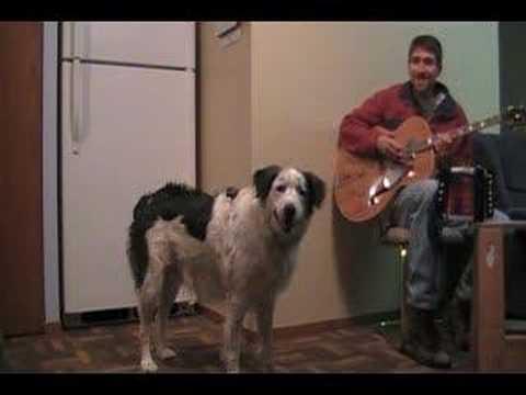 「[イヌ]飼い主のギター演奏に対して、荒ぶりながらアコーディオンで共演する大型ワンコ。」のイメージ
