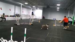 Reeses- CT-ATCH title at the new Doggie U!