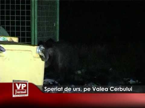 Speriat de urs, pe Valea Cerbului