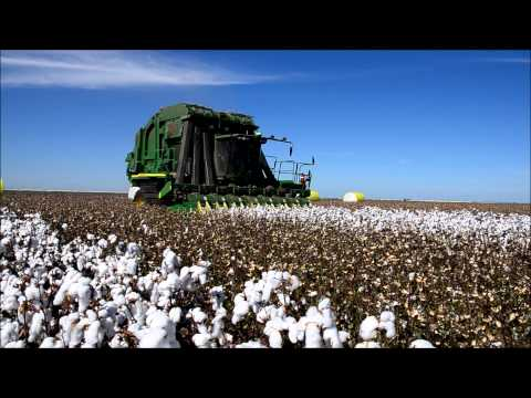 cotton - John Deere 7760 modified to pick 8 row 30 inch cotton in the Namoi Valley near Wee Waa.