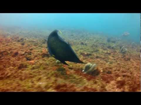 Mergulho na ilha Escalvada em Guarapari - ES