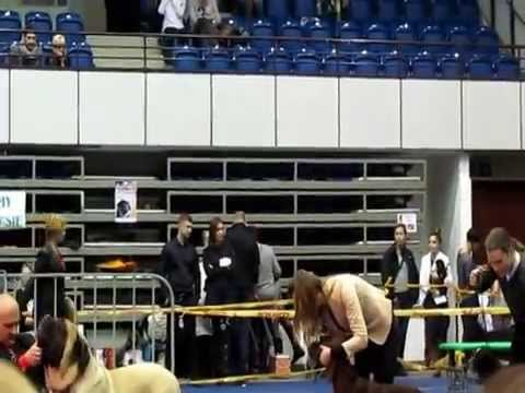 Gdańsk National Dogs Show Poland 11.01.2015