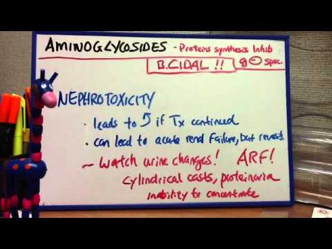 Aminoglycosides - Gentamycin, Tobramycin, Amikacin