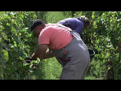Γαλλία: Βούλγαροι αποσπασμένοι εργαζόμενοι σε αμπέλια και θερμοκήπια