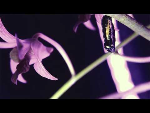 Metamorfose: Do lagarto adorável à linda borboleta