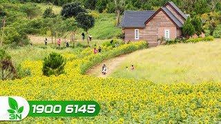 Nông nghiệp | Ngỡ ngàng vẻ đẹp thiên đường hoa ở trang trại Hoa Lộ