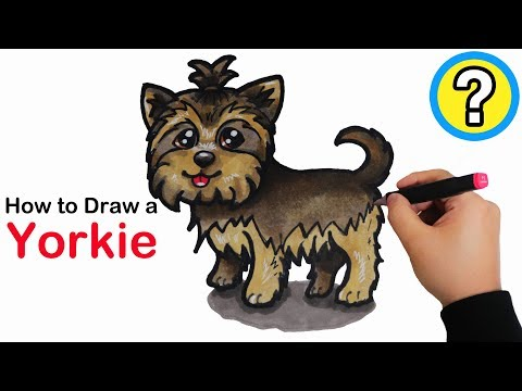 Download How To Draw A Yorkie Step By Step Video 3gp Mp4 Flv Hd Mp3