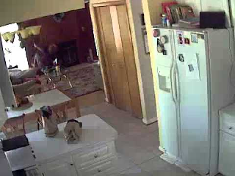 Maryland - Footage captured by a security cam in my house during a earth quake that was in Virginia. Even in Maryland you can see the effects.