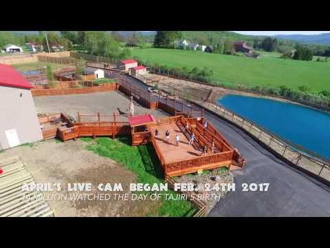 Animal Adventure Air Tour May 2017 (видео)