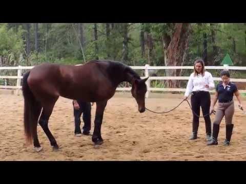 Hípica Nova Canaã - Horsemanship com Ivoneide Sena # 1