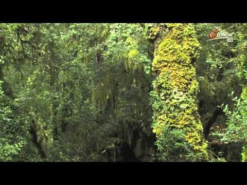 Дикая природа Анд (2011)
