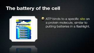 ATP - Energy Of The Cell