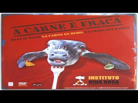 A carne fraca documentario web tv c mera 1 144 for Web tv camera