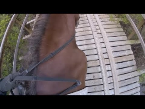 Scary Bridge - Trail Riding in Canada - Canadian Horse