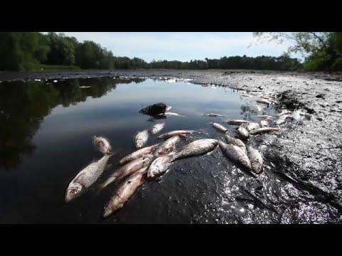 Γερμανία: Αποξηράθηκαν λίμνες μετά τον καύσωνα