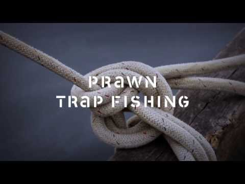 Spot Prawn Trap Fishing: Discover the story of how spot prawns are harvested