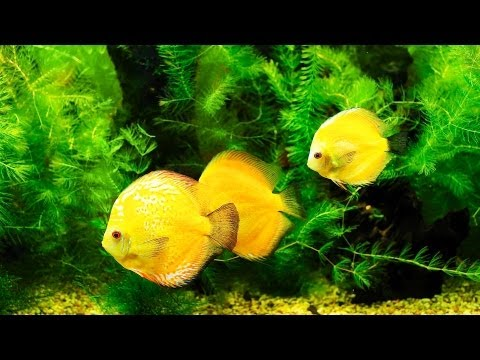 Why Does Your Fish Tank Smell Bad? | Aquarium Care