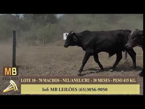257º LEILÃO VIRTUAL MB LEILÕES