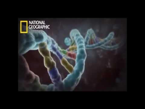 Explicacion Cientfica sobre la Homosexualidad .wmv (видео)