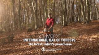 http://www.fao.org/forestry/ Forests and trees absorb the sun's energy and store it by turning it into wood—the world's most used source of renewable energy.