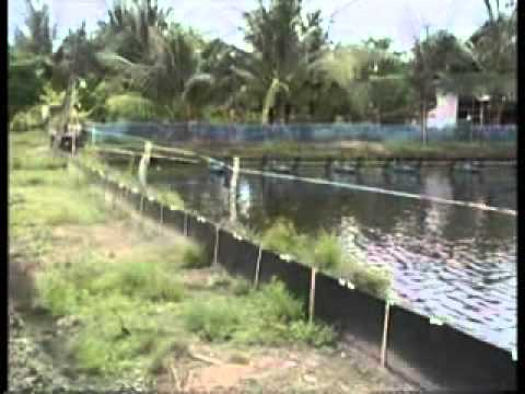Thai Shrimp Industry Care the Environment.flv
