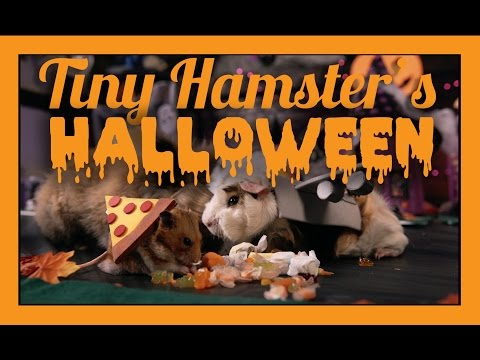Tiny Hamster Host A Tiny Halloween Party