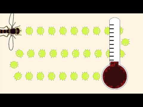 Bionostrum Pest Control se muestra en Focus Innova Pyme