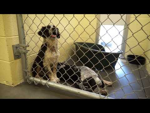 Video: Carter County Animal Shelter, June 22