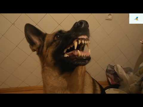 العرب اليوم - شاهد: كلب يتحكم في حالته المزاجية