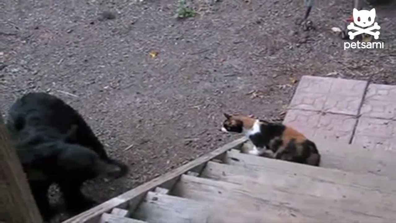 Kad mačka pokaže medvedu ko je gazda