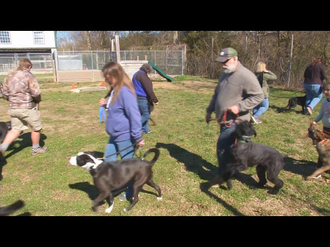 Behavior Changes W/Age  Development Stages In Dogs by Master Trainer David Harris