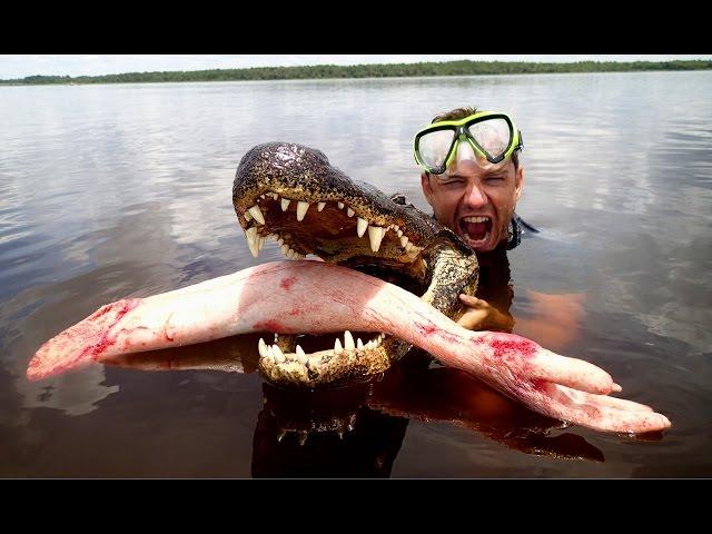 Troll gấu bị cá sấu ăn thịt :))