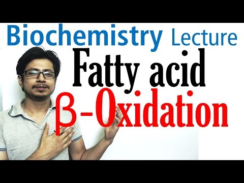 Beta oxidation of fatty acids | Fatty acid metabolism lecture 1