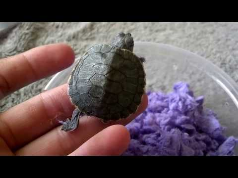 Turtle Unboxing