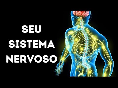 Conheça o seu sistema nervoso