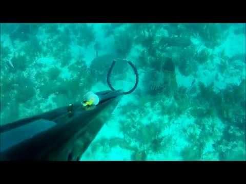 Spearfishing Fl. Keys 2012