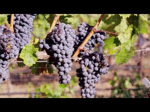 NSDC Vineyard and Winery Properties