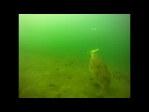 Bucktail Flounder Fishing – Underwater Drift View
