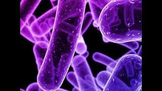 Enterobacteriaceae:   Large family of Gram-negative bacteria that includes many of the more familiar pathogens, such as Salmonella, Escherichia coli, Yersinia pestis, Klebsiella and Shigella, Proteus, Enterobacter, Serratia, and Citrobacter. -Several are present in the human intestinal tract (normal part of the gut flora).-Facultative anaerobes.  Most also reduce nitrate to nitrite. -Many have multiple flagella (however, a few species are nonmotile). -Non-spore forming.   -Variable catalase reactions among the species.-Some strains produce highly toxic endotoxins-------------------------------------------------SUBSCRIBE and LIKE---    http://goo.gl/c8vHHgBest Medical Books Link Below-----   http://goo.gl/XHvpZABest Medical Instrument Link Below-----   http://goo.gl/pW1PZt----------------------------Find us on Facebook :https://www.facebook.com/groups/354791764704980/https://www.facebook.com/Medicalvideosfordoctorshttps://www.facebook.com/freemedicaltextbooksJoin Our Forum: http://www.medicalbook.org