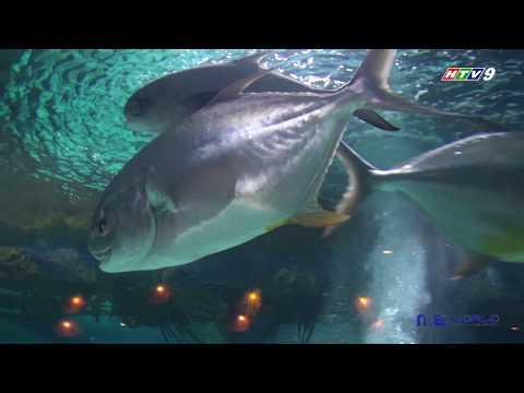 Aquarium HOUSTON - Thời lượng: 7 phút, 8 giây.