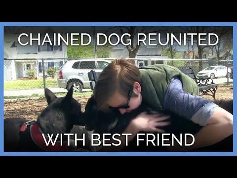 Hund sad længet i 9 år men så...