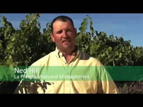 Crop Insurance: Saving the Vineyard