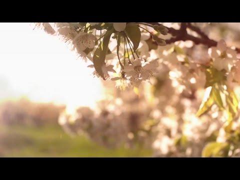 HAVASI Spring Wind - Cultural Bridge symphony