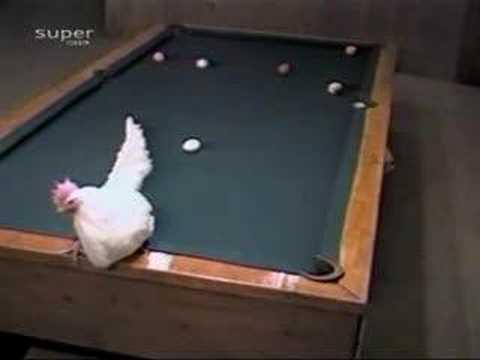 母雞下蛋打撞球