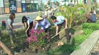 300 cây hoa giấy được trồng tại vườn hoa trước Trung tâm thương mại Vincom+ Uông Bí
