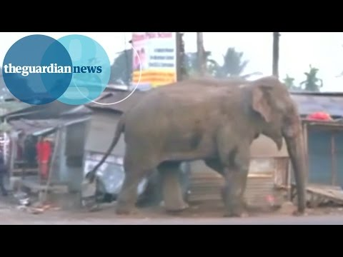 Wild Elephant Goes On Rampage In Indian Village